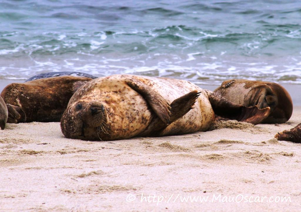 La Jolla: A praia mais charmosa de San Diego