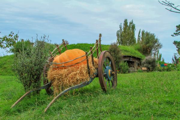 Hobbiton em Matamata na ilha norte da Nova Zelândia é uma das atrações mais populares do país entre os fãs das trilogias Lord of the Rings e The Hobbit
