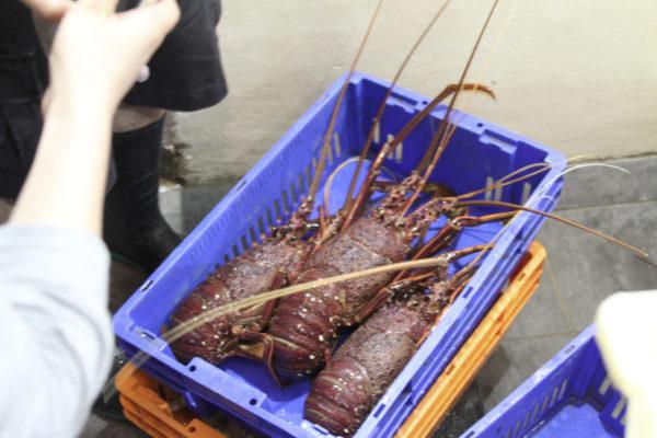 Lagostas no Mercado dos Peixes de Sydney na Australia