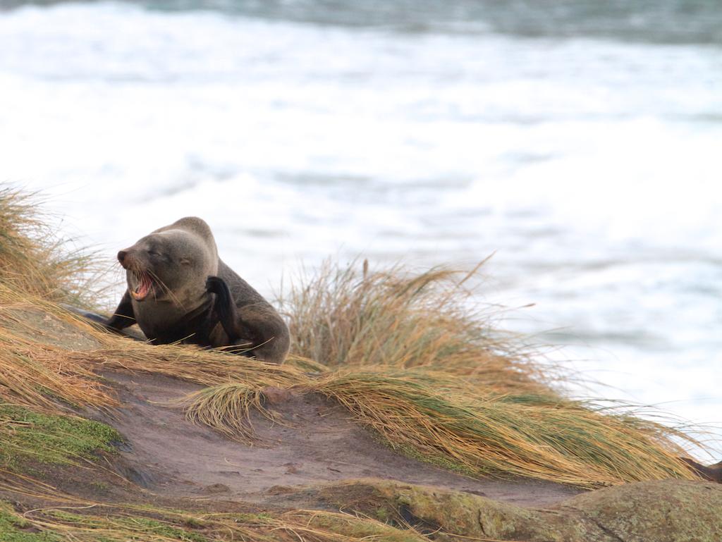 Nature Wonders na Otago Península
