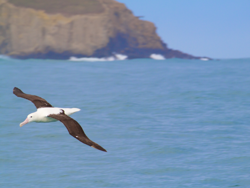 Otago Península em Dunedin