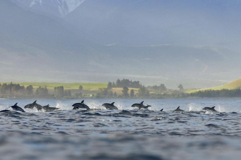 Golfinhos na Nova Zelândia