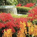 Jardim Nacional das Orquideas de Singapura