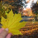 Outubro no Canadá